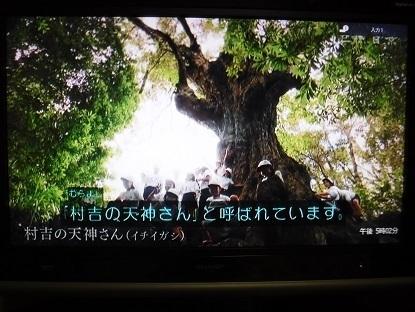 DSCF0008.JPG